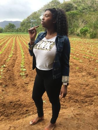 Cuban Cigar in tobacco fields